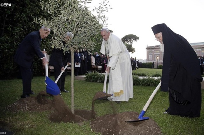 Papa: coerência no dia a dia para respeitar a Criação